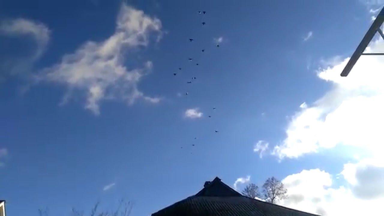 Объявление раздела животные. Николаевские голуби купить, продать или отдать в орловской области на avito.