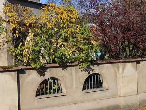 MVI 2753  Torgau, Katharina Luther Burial Place 11302017  E
