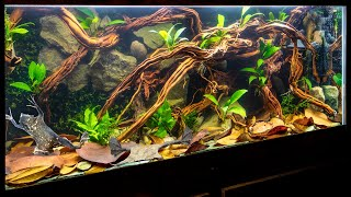 Suriname Toad (Pipa pipa) Aquascape with Underwater Moss Wall