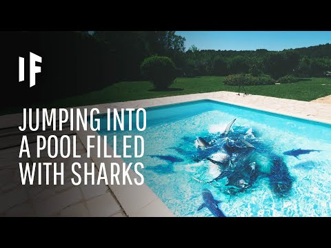 What Happens If You Fall Into a Pool Full of Sharks?
