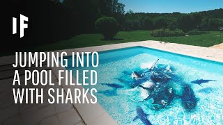 What Happens If You Fall Into a Pool Full of Sharks