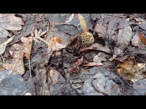 Описание грибов Грибы от А до Я