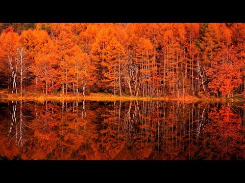 4K 紅葉 絶景 癒し 自然映像 晩秋の御射鹿池 G線上のアリア/ Japan  Mishaka pond autumn Air on the G String