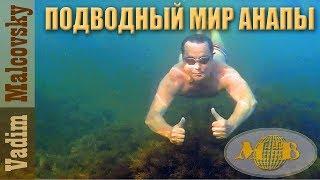 Подводный мир прибрежной зоны Анапы. Рак-отшельник. 2017. Мальковский Вадим