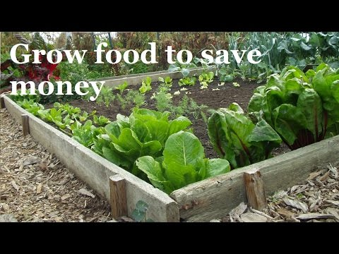 How to Save Big Money by Growing Food (A Complete Guide)