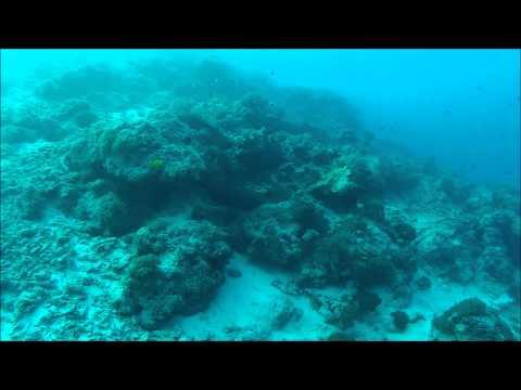 Diving Matemwe - Zanzibar - June 2012