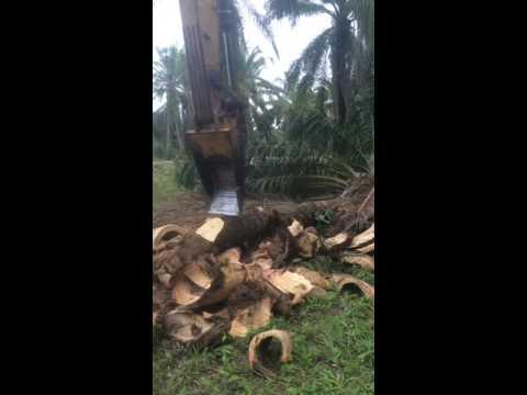สับต้นปาล์ม ราคาถูก Byเอกรถขุดชุมพร โทร 085-4743992