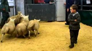 Dingwall Mart/ Portree Sale 29/8/11