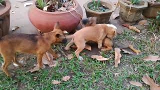 Baby Dogs Playing - Cute Dogs - Dogs Videos - Dogs - Dogs 2020