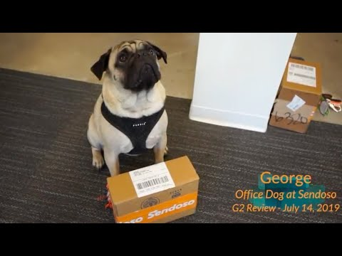 National Dog Day: Sendoso Reviews Read by Office Dogs