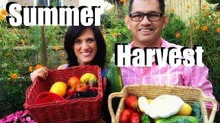 Organic Garden Summer Harvest - Let
