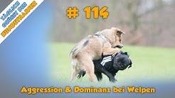 TGH 114 : Dominanz und Aggression bei Welpen - Hundeschule Stadtfelle