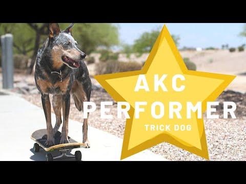 Kronos's AKC Performer Tricks