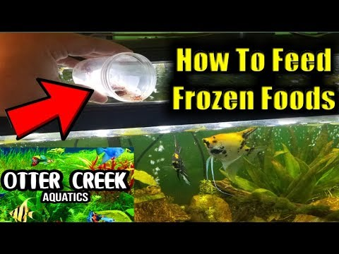 How To Feed Frozen Foods To Your Fish | Fish Feeding Frenzy | Tuesday Tips Episode #8