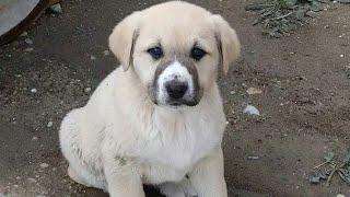 Sokak köpeği Banyo Zamanı 😊 Köpek nasil yıkanır 😄
