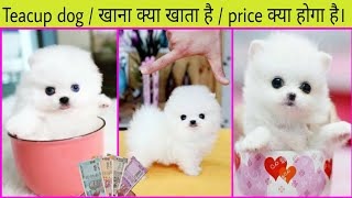 Teacup dog   Pomeranian small Dog details video   teacup dog diet list   small Dog food    dog about