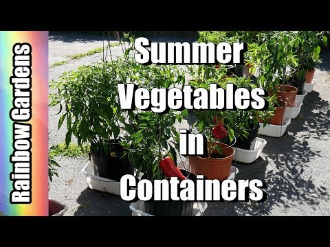 Three Tips for Growing Summer Vegetables in Containers - Cucumbers, Peppers, Tomatoes