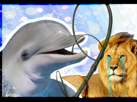 personal injury lawyers reviews - gangster dolphin dominates lion at la firms