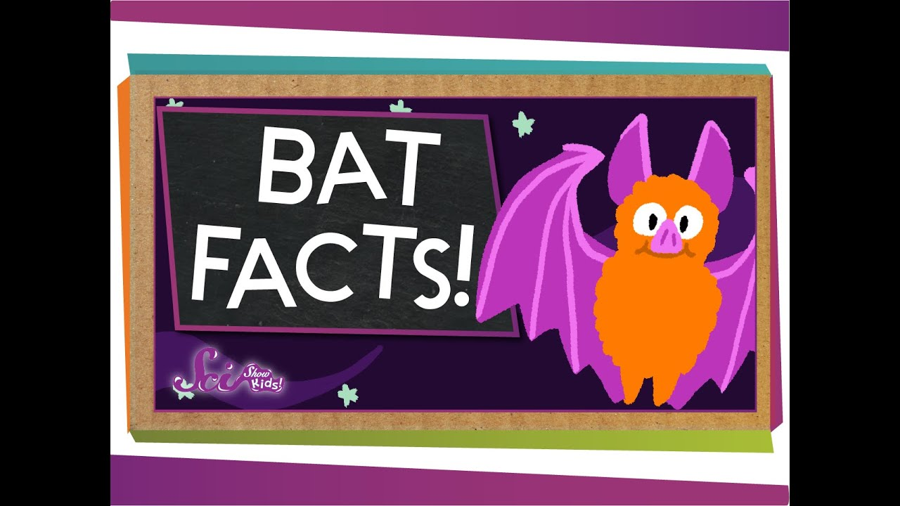 Fun Facts about Bats for Kids! Learn about Bats with this ...