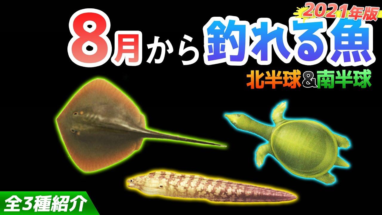 【あつ森】8月から釣れる魚を全て紹介!魚影や出現時間・場所・値段・釣り方のコツも解説!エイやスッポンやウツボなどレアな魚が登場!【あつまれどうぶつの森 8月の魚図鑑コンプリート】