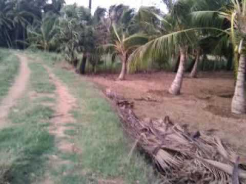 Lease agricultural land in tamilnadu
