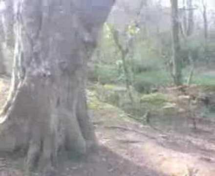 Llion on swing