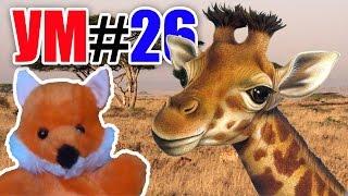 УМ #26 - Удивительный мир. Детям о жирафах. Развивающиее видео. Наше_всё!