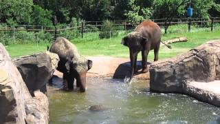 My visit to the Oklahoma City Zoo
