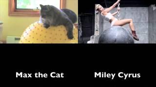 Wrecking Ball: Cat Parody