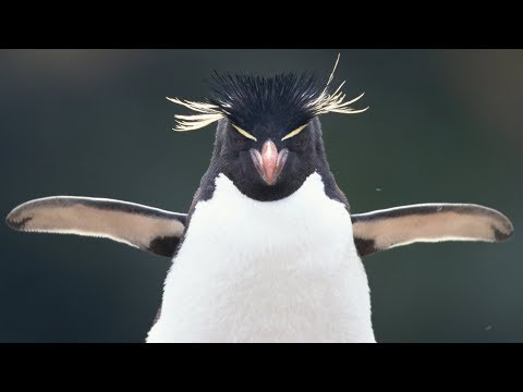 O insólito paseo dun par de pingüíns por un acuario pechado polo  covid-19