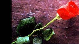. gloria estefan  ayer encontre la flor