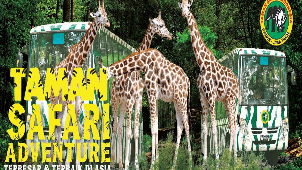 Adventure Of Taman Safari Ii Prigen Pasuruan Indonesia Youtube