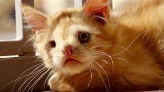 Nobody Wanted This Kitten Because They Thought He Was Too Ugly – But Now He's Having The Last Laugh…