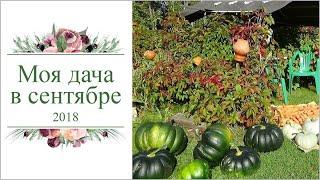 Летопись огорода 2018г, сентябрь, Кострома