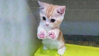 「猫かわいい」 すごくかわいい子猫 - 最も面白い猫の映画 #141