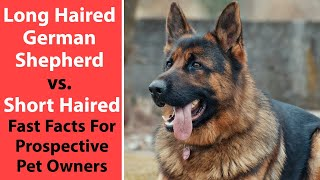 Long Haired German Shepherd vs. Short Haired: Fast Facts For Prospective Pet Owners
