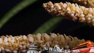 《地理中国》 20190721 百年地理大发现 远古奇花| CCTV科教
