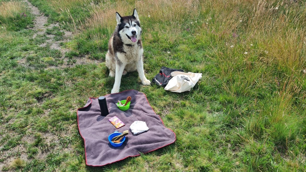 Never trust a Husky on a Picnic! Can't believe he did this!