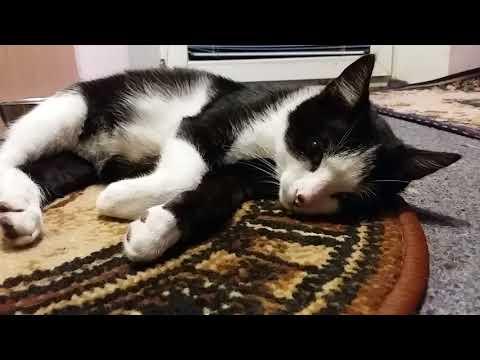 Что делать если болеет котенок