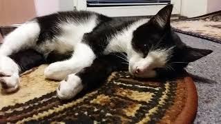 Найденыш заболел.Как лечить котенка?