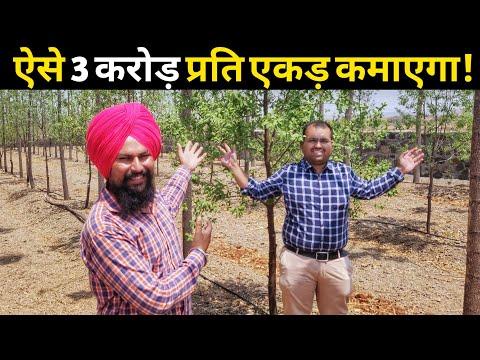 किसान ऐसे 3 करोड़ कमाएगा चंदन की खेती से Chandan Tree Farming Sandalwood in india