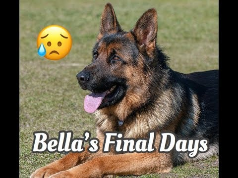 Bella's Final Happy Days - Children's Bedtime Story/Meditation