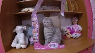 САМАЯ МИЛАЯ КОШКА В МИРЕ 😻 Шотландская Вислоухая Хлоя 🐱 Видео про котов Cat