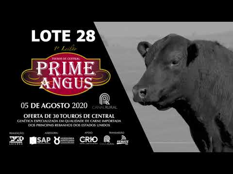 LOTE 28   BLACK OPAL TE932 CHORIZO Prod  Agência El Campo