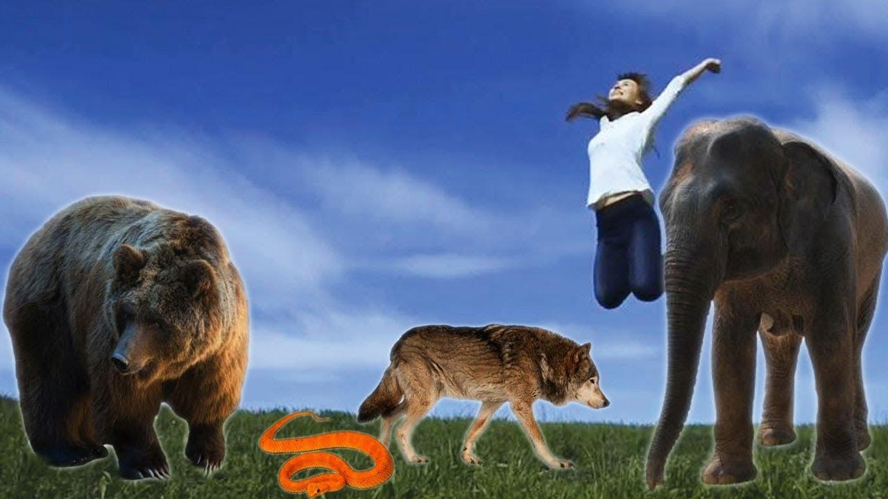 Bài 7: Các hành động và động vật hoang dã | Dạy bé các hành động và động vật cho bé tập nói