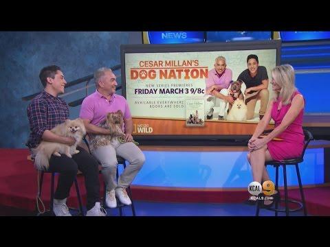 Dog Whisperer Launches New Show