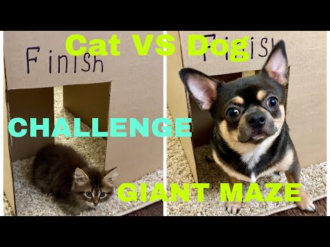 Giant Maze Kitten Cat vs Puppy Dog Challenge - Who Will Win ?