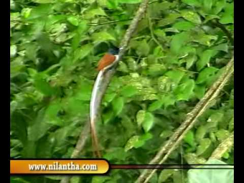 Sri Lanka Sinharaja Rainforest Amp Bodinagla Youtube