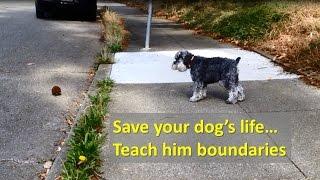 Life Saving Training - Teaching Your Dog Boundaries