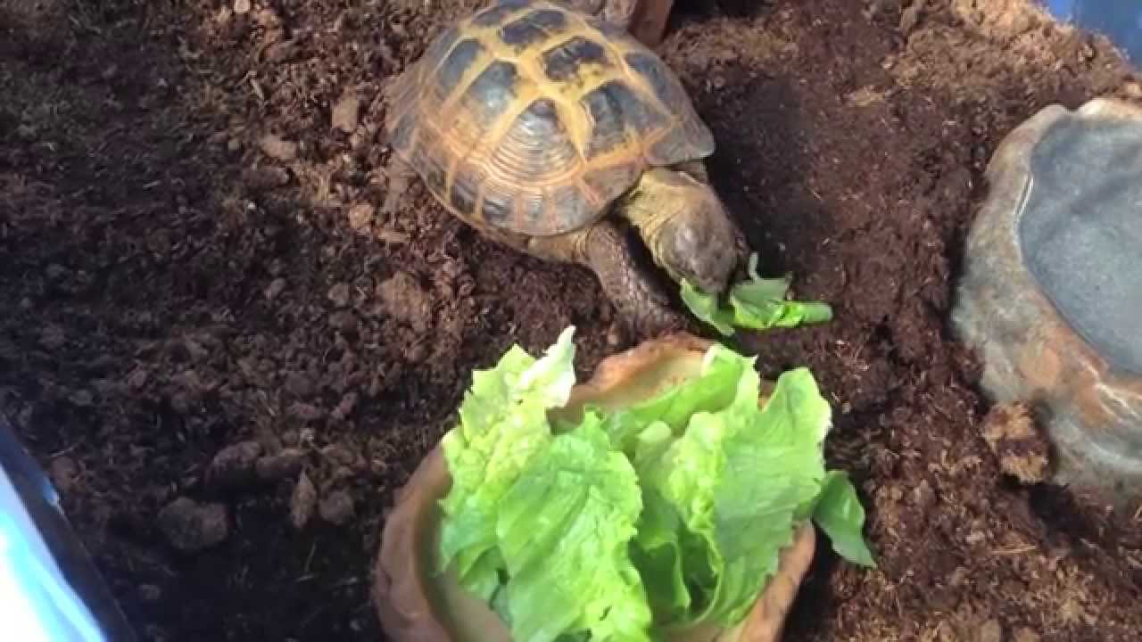 Where can i sell baby russian tortoises? Do i need a liscense?
